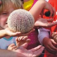 Skibbereen Children's Festival, July 2013